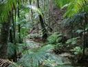 2 - Rainforestwalk auf Fraser Island.