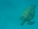 28 - ... Turtles ...